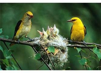 Kuş kadar sorumluluk taşıyabilmek