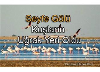 Kırşehir'e yolculuk, Seyfe Gölü'nü ziyaret (   4  )
