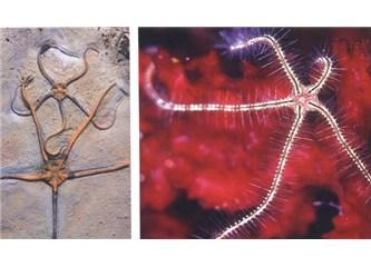 Fosiller neden yaratılışı ispat eder?
