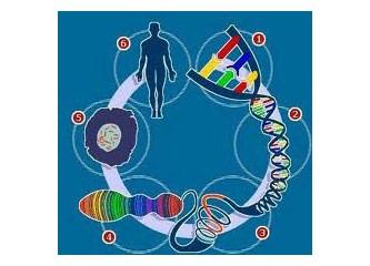 Evrimden (DNA'dan) Yansımalar