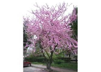 Bahar gelmiş meğer…