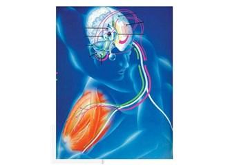Vücudumuzda nasıl bir elektrik düzeni olduğunun farkında mısınız?
