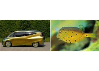Kutu balığının kusursuz yapısı Mercedes'e nasıl ilham verdi!