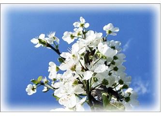 1 Mayıs Bahar Bayramınız kutlu olsun