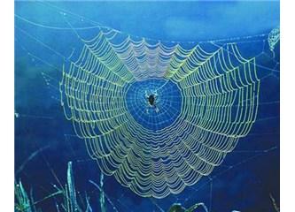 Evlerin en dayanıksızı Örümcek yuvasıdır