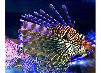 Deniz canlıları yavrularını nasıl koruyup kolluyorlar?