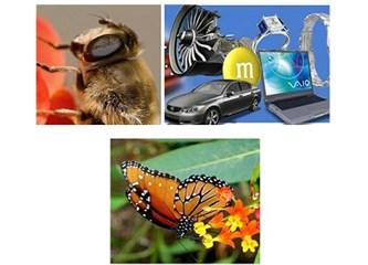 Teknolojiye ilham olan Akrobat balarıları ve doktor kelebekler