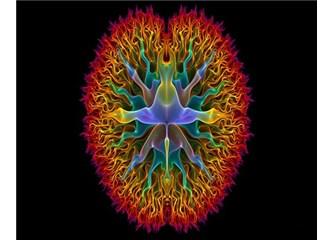 Beynin Sırları- Belgesel