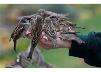 Eldeki serçe, damdaki güvercinden iyidir.