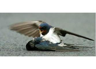Kuşlara zarar vermeyelim