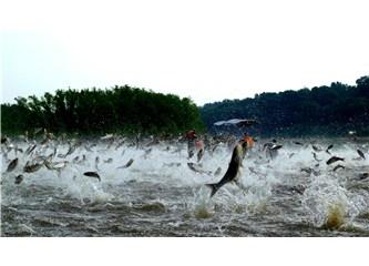 Aşkla yakalanan balıklar