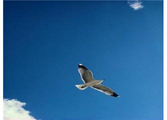 Yalnızca kanatlarına güven