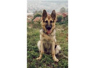 İlk yavru köpeğimi kaybettim ama sevgisini asla