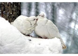 Hû Kuşlar Hû… Vay! Ninnilerle... Ağıtlarla büyütürler Bizi…