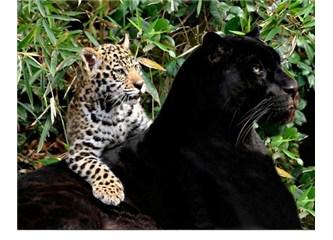 Doğa, evrimcilerin iddia ettiği gibi sadece savaşın hakim olduğu bir yer değil!