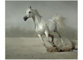 İçimizdeki Yabani Atların Peşinde