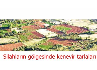 Diyarbakır – Bingöl arasında esrar tarlaları ve Kılıçdaroğlu'nun fişlenmesi...