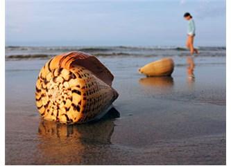 Güzün Deniz