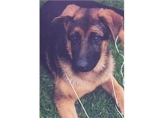 Ölen köpeğin ardından yeniden köpek sahiplenmek