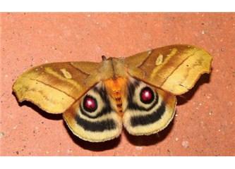 Evrimcileri en çok bunaltan konulardan biri: Simetri!