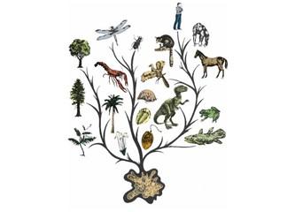 """Charles Darwin'in evrim teorisi ile yaratılışçıların """"akıllı tasarım"""" kuramları arasındaki kavga"""