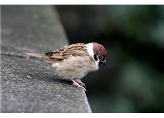 Son kuşlar - benim şarkılarım