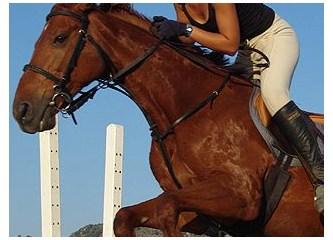 Dünya'da ata ilk binen kavim Türklerdir ve atlar ilk kez Türkler tarafından ehlileştirilmiştir.