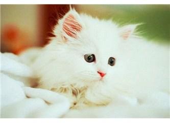 Kedi dostları, ekran başına