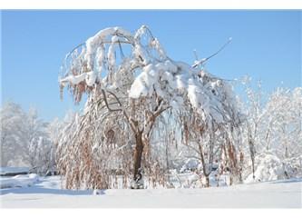 Yılın ilk karı... Üşüyen melekler