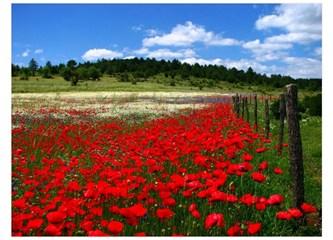 Gene bahar gelecek ve gene çiçekler açacak.
