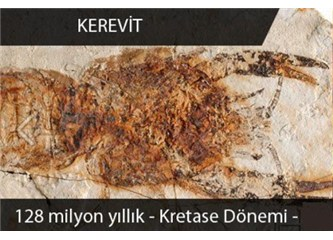 Evrimcileri çıldırtan fosiller! Video