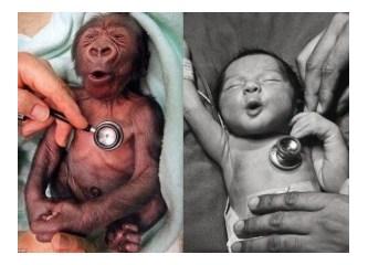 İki Resim arasındaki fark nedir?
