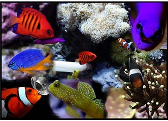Masmavi okyanusların dibinde yatan muhteşem çeşitlilik…