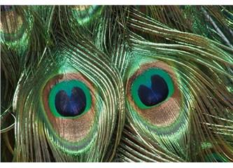 Bu kanatlardaki detaylar evrimle açıklanamaz!