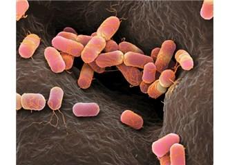En zor ve güç koşullarda ayakta kalabilen canlılar: Ekstremofiller