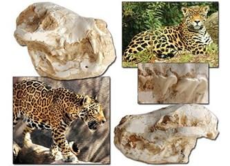 Evrimi tarihe gömen milyonlarca yıllık fosiller, resimler