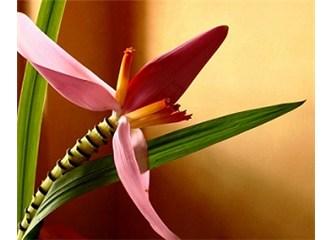 Bitkilerin yaralarını nasıl onardıklarını biliyor musunuz?