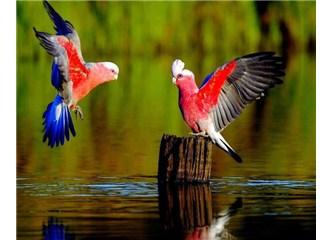 Iğdır kuş gözlem evinde halkalanan kuşlar