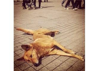 Bir sokak köpeğinden mektubunuz var
