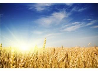 Çimlenmiş buğday alkali ve çok yararlı bir besin../ ''Beslenmenin Diyalektiği'' (49)