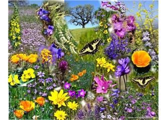Bahar coşkusu