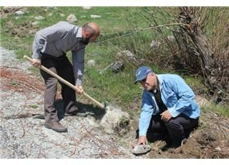 Konya Hasanşeyhliler, köy yollarına 220 fidan diktiler.