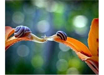 Empati, İletişim, Türkçe, Mutluluk, Sevgi
