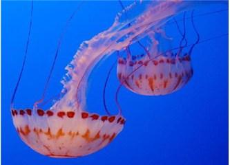 Denizaltında yaratılan muhteşem bir sanat: Denizanaları