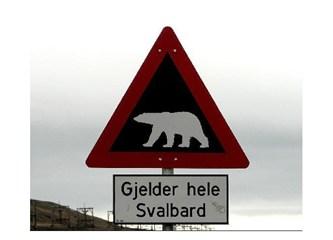 Norveç de iş imkanı. Kutup ayıları için gözcü aranıyor
