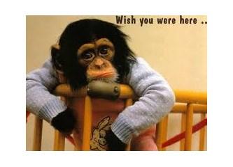 Maymun iştahlı biri, aşık olabilir mi?
