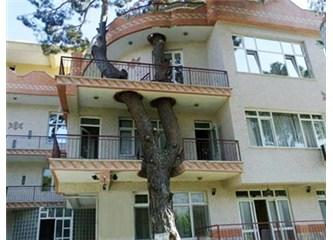 """""""Rahatı Kaçan Ağaç"""""""