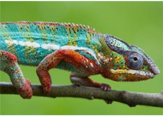 Hayvanlardaki müthiş kamuflaj yeteneği evrimle açıklanamaz