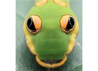 Canlılardaki sahte gözler!