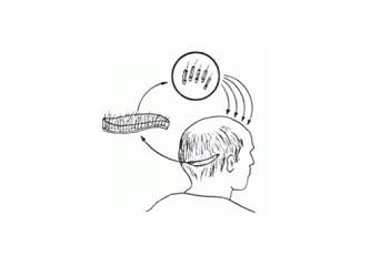 Saç Ekimi işlemi yaşamsal Risk oluşturur mu